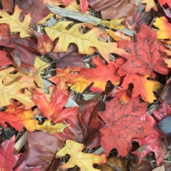 Sugar Tree Papers - Fall Leaves