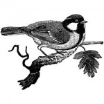 Lablanche Silicone Stamp - Chickadee Click to enlarge image(s) Lablanche Silicone Stamp - Chickadee