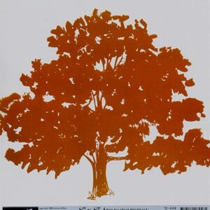 "Family Matters - Family Tree Transparency- 8""x 8"""