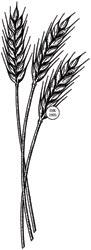 Judikins Rubber Stamp - Wheat