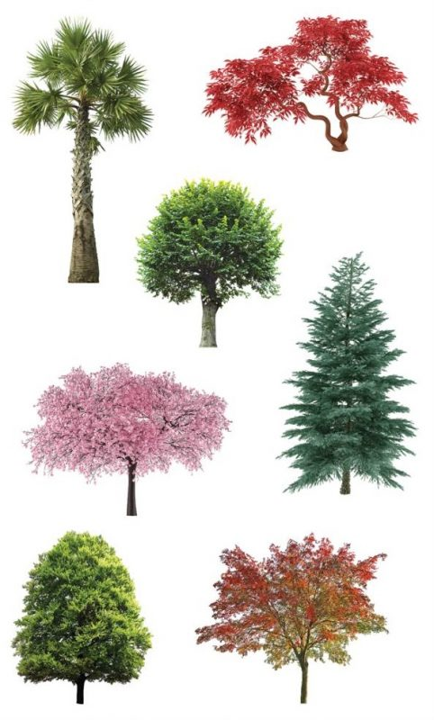 Mrs. Grossman's Stickers - Trees In Nature