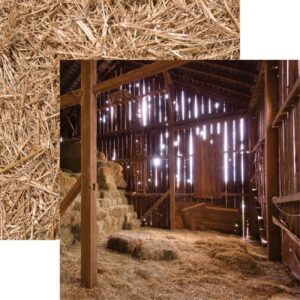 On the Farm - In the Barn