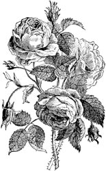 Lablanche Silicone Stamp - English Rose