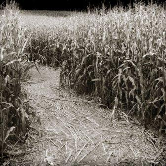 "Scrapbook Customs - Corn Maze - 12"" x 12"""