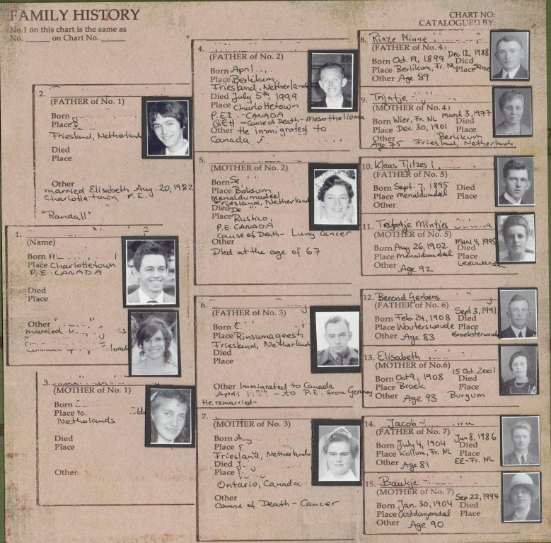 My family tree essay