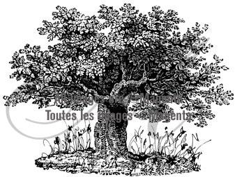 Magenta Stamps - Flowering Tree
