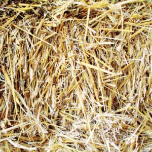 Sugar Tree Papers - Hay