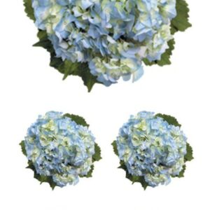 "Paper House - Hydrangeas 2"" Sticker"