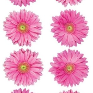 Sticko Photo Flowers Stickers - Pink Gerbera