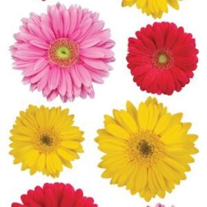 Sticko Photo Flowers Stickers - Gerbera Mix