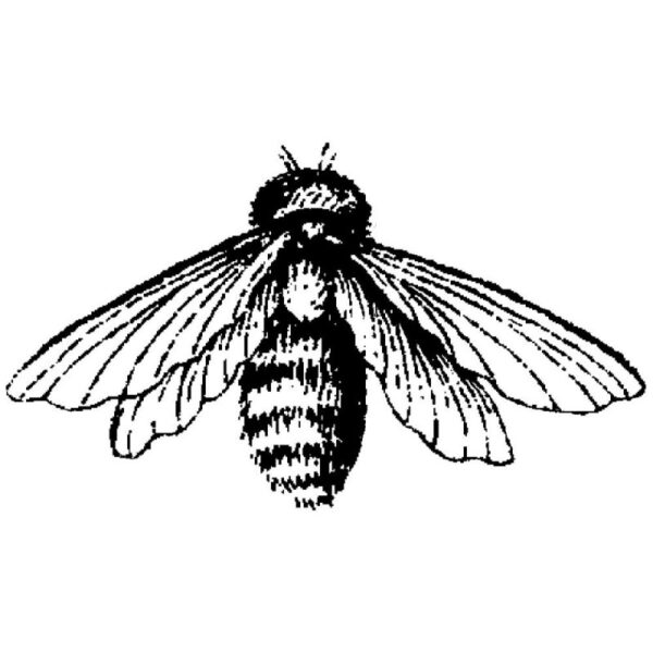 Magenta Stamps - Bee